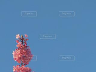 ピンクの花の木 - No.846654