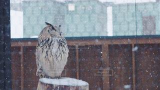 建物の前に立っている鳥 - No.880720