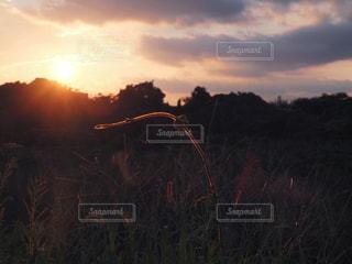 芝生のフィールドに沈む夕日 - No.880724