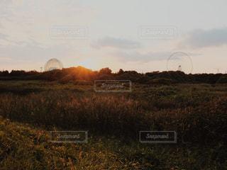 背景の木と草原に沈む夕日の写真・画像素材[880725]