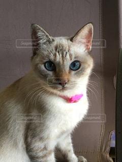 近くに猫のアップの写真・画像素材[1199635]