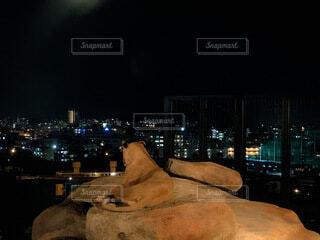 空,夜,夜景,動物,景色,動物園,ライオン,百獣の王