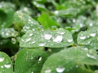 近くに緑の葉のアップの写真・画像素材[822199]