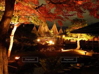 秋,紅葉,白鳥庭園,愛知県名古屋市