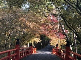 木の隣に赤い公園のベンチの写真・画像素材[892860]