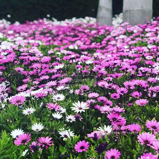 花の写真・画像素材[2057645]