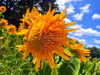 花の写真・画像素材[2057700]