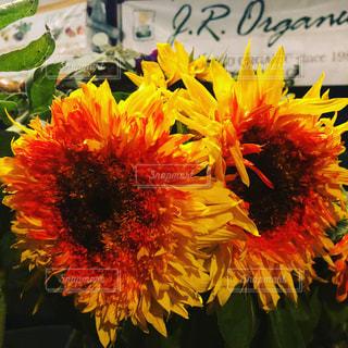 花の写真・画像素材[2057709]