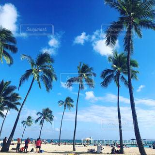 ヤシの木のあるビーチの写真・画像素材[2332864]