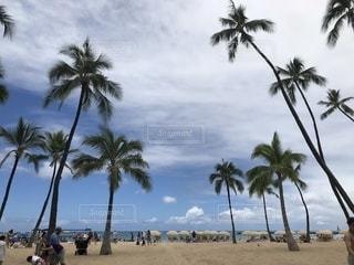 ヤシの木のある浜辺の人々のグループの写真・画像素材[2332984]