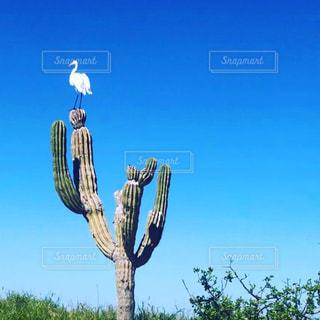 サボテンと鷺の写真・画像素材[3320162]