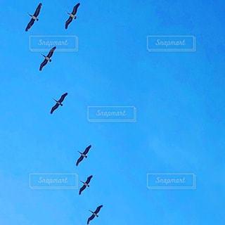空中を飛んでいるペリカンの群れの写真・画像素材[3320161]