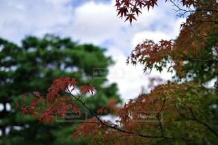 木の枝に花の花瓶 - No.796308