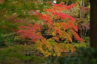 近くの緑豊かな緑の森 - No.863590