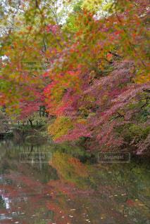 フォレスト内のツリー - No.863596