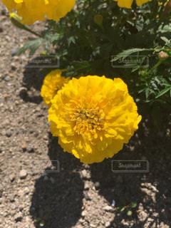 自然の写真・画像素材[611597]