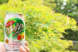 梅酒 - No.538015
