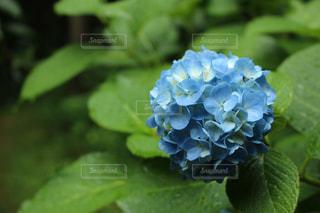 花の写真・画像素材[573994]