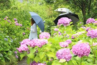 ピンクの花が庭園にの写真・画像素材[811866]