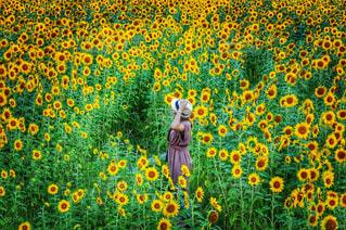 黄色の花の写真・画像素材[899775]