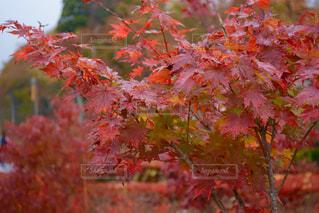 秋の写真・画像素材[537745]