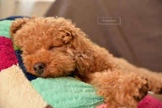 犬の写真・画像素材[483387]