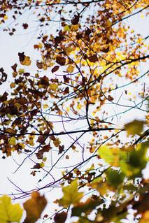 木の枝にとまった鳥の写真・画像素材[857825]