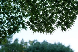 近くの木のアップの写真・画像素材[857828]