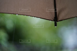 雨の日の写真・画像素材[2109836]