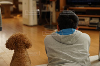 犬,屋内,後ろ姿,人物,背中,人,後姿,男の子