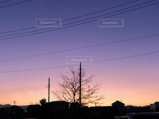 空,屋外,ピンク,太陽,黒,夕暮れ,パープル,シルエット,光,樹木,景観