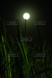 自然,風景,空,秋,夜,きれい,散歩,草,月,満月,明るい,フルムーン,天体観測