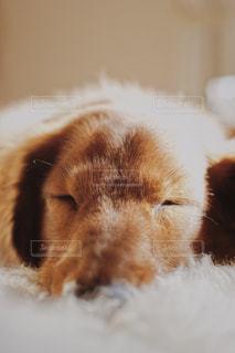 犬 - No.497240
