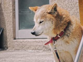 犬 - No.497261