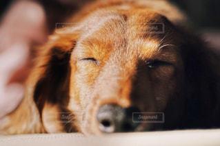 犬 - No.497263