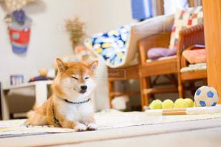犬の写真・画像素材[478859]