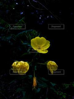 黄色の写真・画像素材[604962]