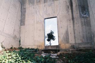 木の写真・画像素材[703735]