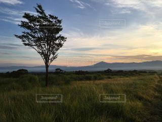夏,草原,景色,夜明け,旅,熊本,tree,summe,夢大地グリーンバレー