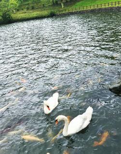 湖の写真・画像素材[658268]