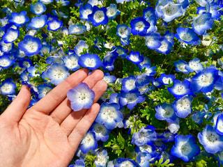花の写真・画像素材[479634]