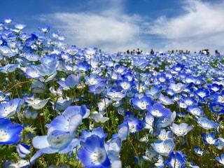 花の写真・画像素材[479639]