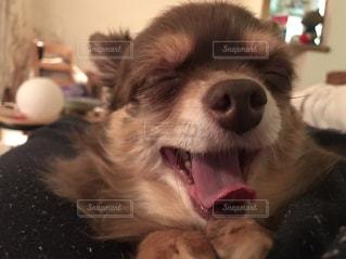 犬の写真・画像素材[479851]