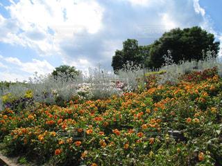空,公園,花,草花,樹木,flower,Sky,はな,#笛吹川フルーツ公園