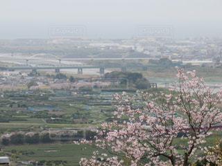 花,桜,屋外,川,河,flower,はな,river,さくら,岩本山公園