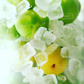 梅,シロップ,自家製,梅酒,氷砂糖,japanese plum,syrup