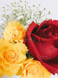 バラの花束の写真・画像素材[602690]