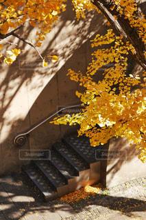 近くの木のアップの写真・画像素材[879857]