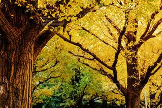 フォレスト内のツリーの写真・画像素材[879874]