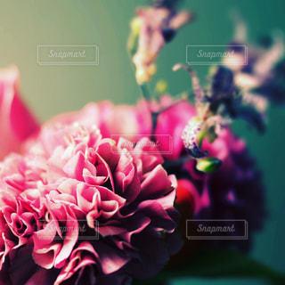 近くの花のアップの写真・画像素材[879964]